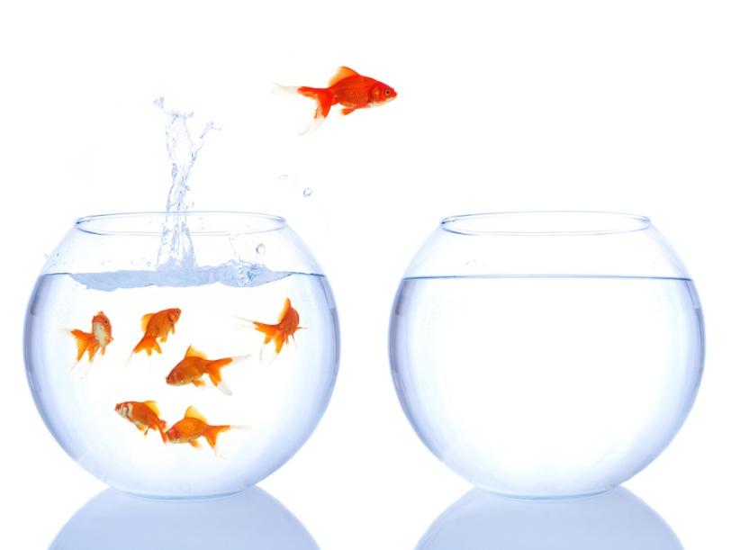 change-fish